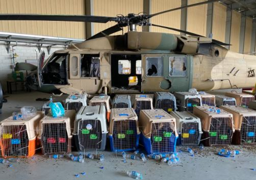 Military Dogs Left Behind