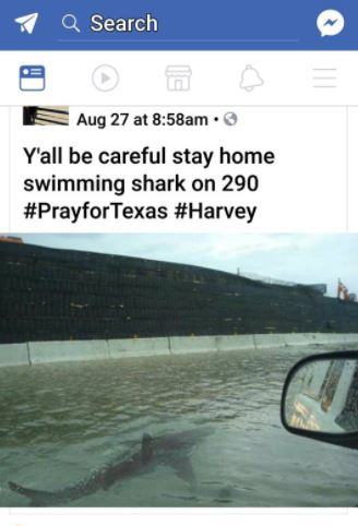 Hurricane Harvey Shark Warning
